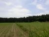 Blick vom Garten auf Wald und Wiese